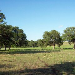 71 acres in Kendall County, Texas