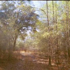 40 acres in Lafayette County, Florida