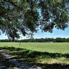 225 acres in Levy County, Florida
