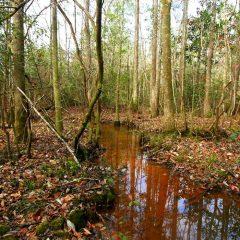 Jackson County Timberland Tract