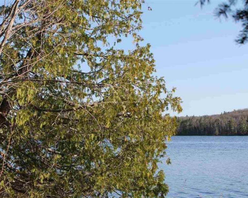 Ruth Lake Charmer, Michigan